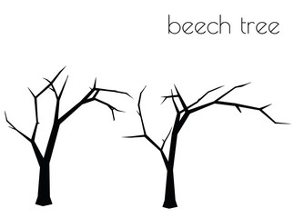 beech tree silhouette on white background