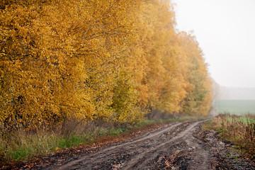 Golden Fall Season