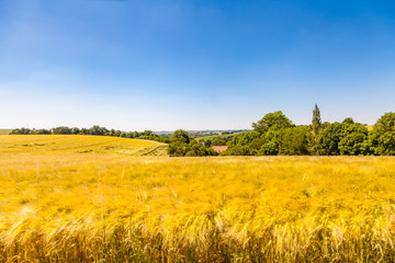 Agrar Landschaft im Hochsommer