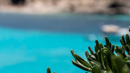 Türkisblaues Meer mit Pflanze / Hintergrund