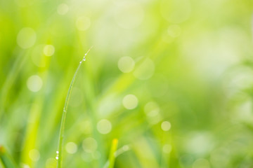 Grass and drops