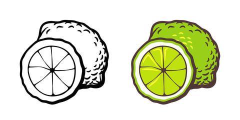 Hand drawn vector illustration of lime. Outline and colored version
