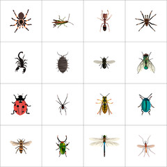 Realistic Ladybird, Damselfly, Bug And Other Vector Elements. Set Of Insect Realistic Symbols Also Includes Insect, Gnat, Green Objects.