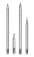 Pencil illustration, drawing, engraving, ink, line art, vector