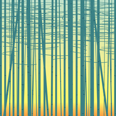 Seamless vector texture with a picture of the forest of trees against the sky. Birch forest vector background. Birch grove pattern. Background of trees