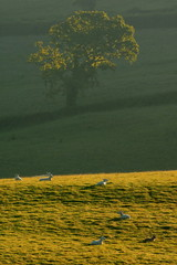 Wall Mural - Early morning on farmland in Blackdown Hills AONB (Area of Outstanding Natural Beauty), Devon