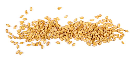wheat grain isolated on white background Wall mural