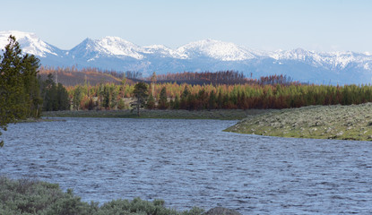 A chopping Madison River winding its way through Yellowstone National Park with sage line shore in the foreground and rugged, snow capped mountains in the distance.