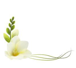 Нежные цветы, белая фрезия. Символ любви и доверия. Уголок.