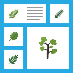 Flat Icon Natural Set Of Acacia Leaf, Alder, Garden And Other Vector Objects. Also Includes Acacia, Leaves, Spruce Elements.
