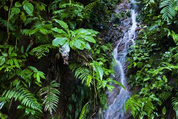 Waterfall in Madidi National Park, Bolivia