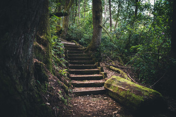 Wall Mural - Moss covered stairs in the forest.