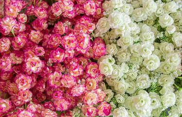Bouquet, Flower, Flowerbed, Perfume, Plant