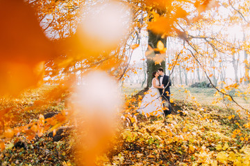 The lovely composition of the hugging newlyweds leaning on the yellowed tree in the autumn park.