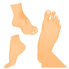 Foot vector in side view and bottom of foot. Illustration about foot care.