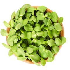 Sunflower shoots in wooden bowl. Fresh sprouts of the oilseed Helianthus Annuus, the common sunflower. Green edible plants. Isolated macro food photo close up from above on white background.