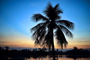 Silhouettes of coconut tree at sunset : soft focus