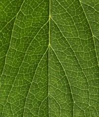 Strawberry leaf macro pattern