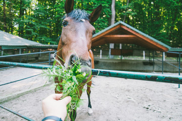 man feeds horse, first person view