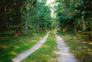 Wall Mural - road in the woods