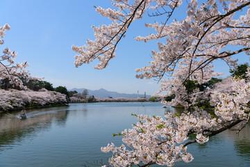 岩手 盛岡 春の高松公園
