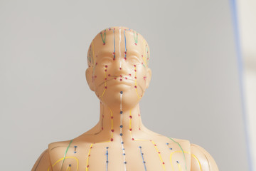 Medical acupuncture model of human head on gray background