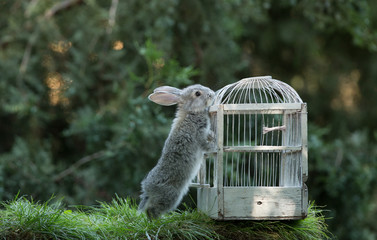 Little hare on the lawn, a rabbit in a cage