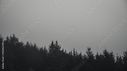 Black And White Forest In Fog Stock Photo And Royalty Free Images