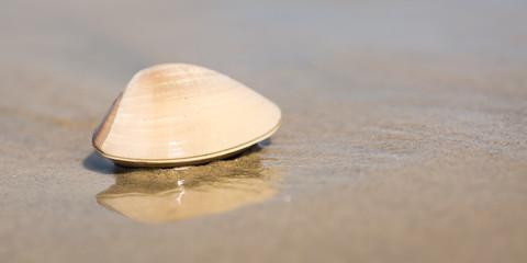 A clam on a beach in California