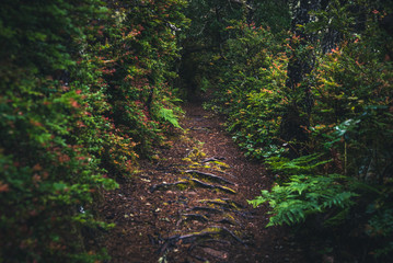 Wall Mural - Lush forest path.