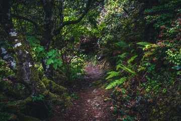Wall Mural - Lush forest trail.