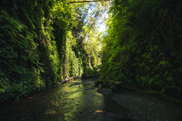 Wall Mural - Fern Canyon, California, USA.