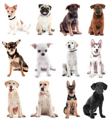 Collage of cute puppies on white background