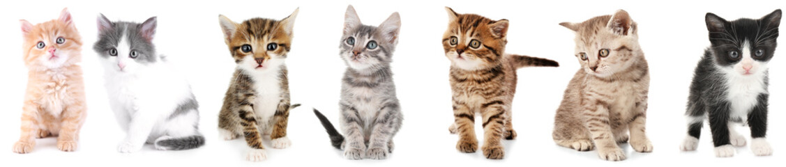 Poster de jardin Chat Collage of cute kittens on white background