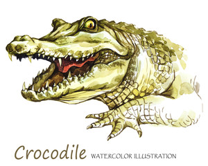 Watercolor Crocodile on the white background. African animal. Wildlife art illustration. Can be printed on T-shirts, bags, posters,