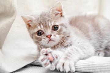 A little kitten plays on the floor.