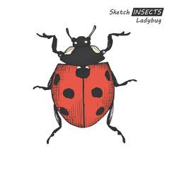 Hand drawn ladybug