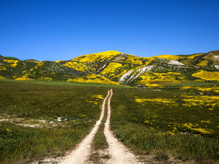Flower field mountain during spring in California