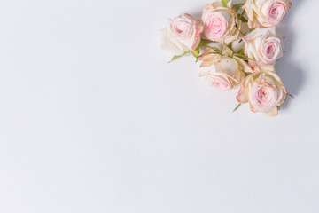 beautiful delicate flowers spray roses on a white background in the corner with place for label, close-up, top view