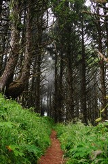 Thin dirt trail through a lush forest, with fog encroaching.