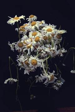a bouquet of wilted daisies