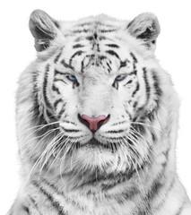 Fototapete - Magnificent white tiger portrait