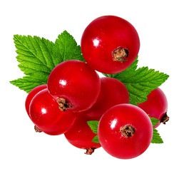 Fototapete -  red currant isolated on white