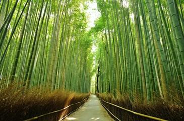 竹林./朝の竹林の木洩れ日を清々しく表現しました.