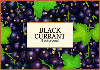Rectangle label on ripe black currant background. Vector card illustration. Black berry branch fresh and juicy currant for packaging design juice, jam, ice cream, smoothies, detox, cosmetics cream