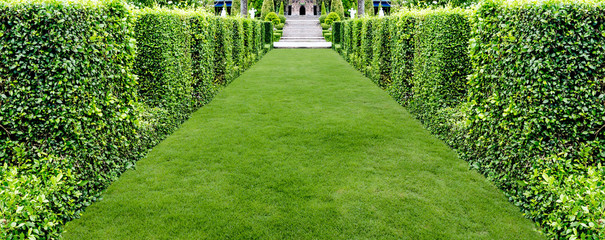 Aluminium Prints Grass beautiful green grass walkway for background