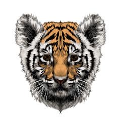 tiger cub head sketch vector graphics color picture