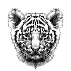 tiger cub head sketch vector graphics black and white drawing