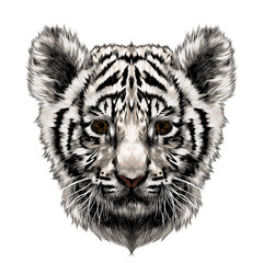 white tiger cub head sketch vector graphics color picture