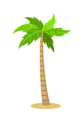 Palm tree isolated on white. The cartoon icon. Vector illustration.